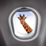 Как арендовать частный самолет в странах Африки